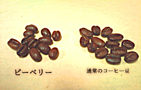 ピーベリー peaberry coffee beans